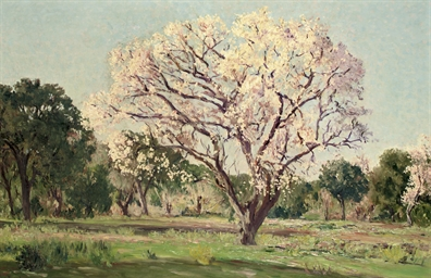 An almond tree in blossom