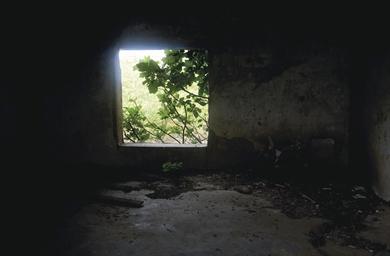A Window through the Life