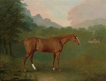 A chestnut hunter in a wooded landscape