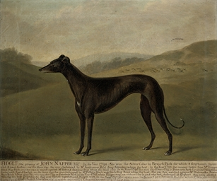 Fidget, a greyhound, in a land