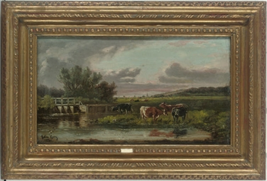 Cattle watering on the canal;