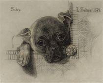 A study of 'Sukey', a pug puppy