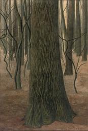 Écorce de chêne: an oak tree i