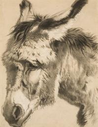 Tête d'âne