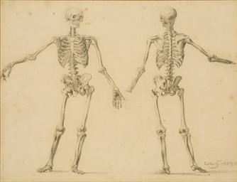 Etudes de squelettes, l'un de