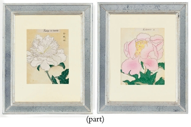 Studies of Peonies