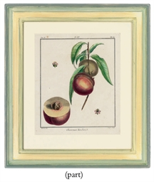 Fruit Studies, from Traite des