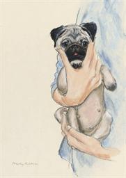 'Precious Pug Puppy'