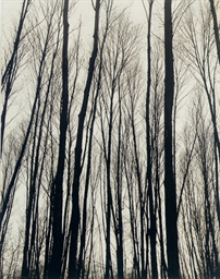 Trees, c. 1937