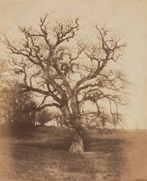 Tree study, c. 1855