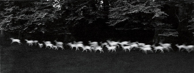 Running White Deer, County Wic