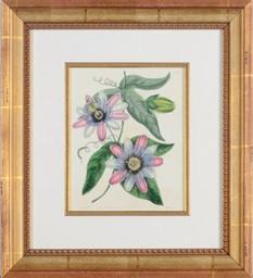 [Botanicals]: Eight Plates