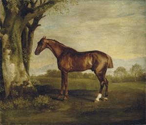 Antinoüs, a chestnut racehorse
