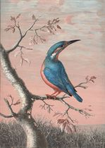 A kingfisher on a branch