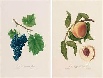 GALLESIO, Giorgio (1772-1839). Pomona Italiana, ossia trattato degli alberi fruttiferi. Pisa: Niccoló Capurro, 1817-1839.