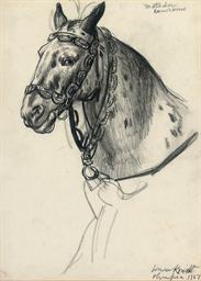 'Matador' Danish Horse