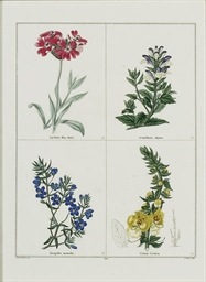 FOURTEEN COLOURED ENGRAVINGS F
