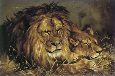 A lion and lioness resting