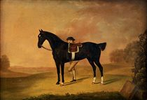 A dark bay hunter with a groom in a landscape