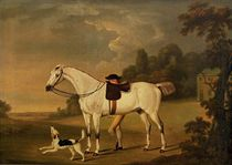 A grey hunter with a groom and a hound before a barn
