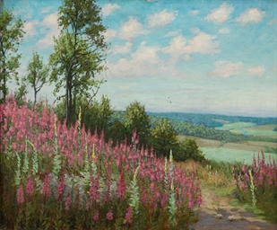 Foxgloves on a country path, a