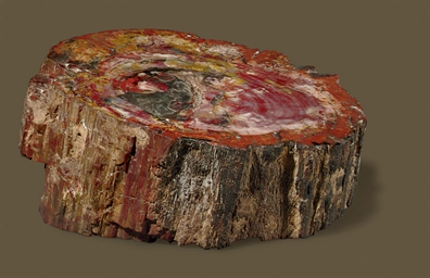 A PETRIFIED WOOD SPECIMEN