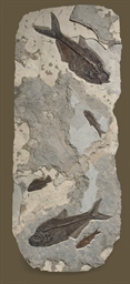 A LARGE GREEN FISH FOSSIL