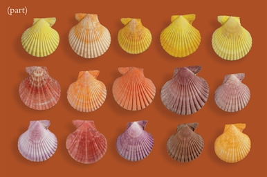 A GROUP OF SHELLS AND CORAL