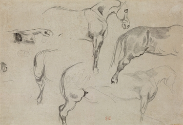 Studies of a horse