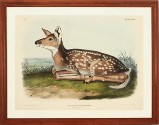 Common American Deer, Pl. LXXX