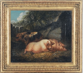 Pigs resting in a barn