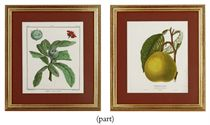 NINE FRENCH HAND-COLOURED ENGRAVINGS OF FRUIT