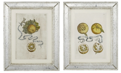 Botanical studies of Citrus Fr