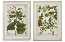 Studies of flowers, from Phytanthoza iconographia