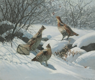 Grouse in Fresh Snow