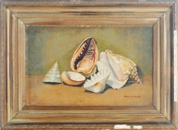 Still life of shells