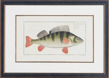[Goldfish]: Four Plates