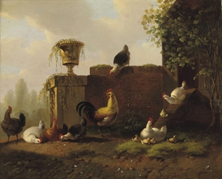 Pluimvee: chickens in the sun