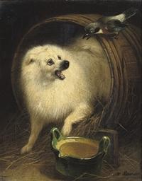 A dog in a barrel