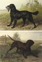 A black Setter with it's prey; A black Labrador