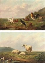 Chickens and a rooster in a meadow; Grazing sheep near a pond