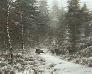 Wild boars in winter