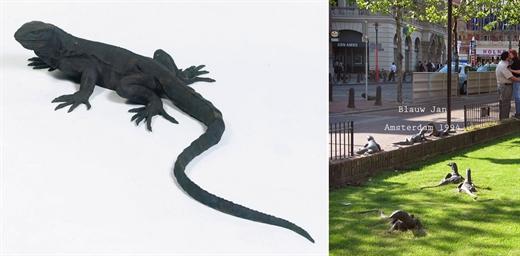 Blauw Jan - a lizard