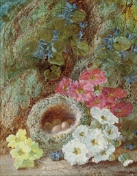 Primroses and a bird's nest on