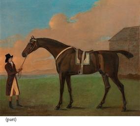 The dark bay racehorse Dragon