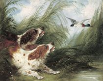 Spaniels surprising a duck