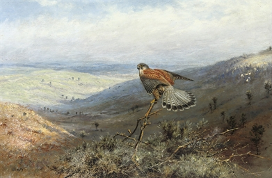 A kestrel on a hillside