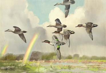 Green-winged teal flying over