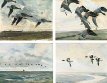 Pinkfeet swinging round their chosen wheat field; Pinkfeet settling just over the sea wall; Shelducks in flight; and Velvet scoters