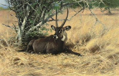 Water buck in the bush